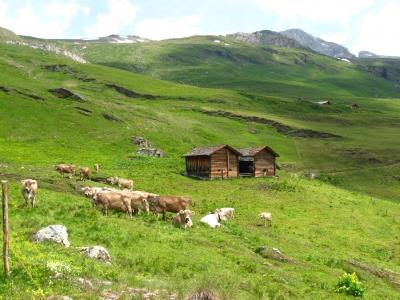Alp Platta