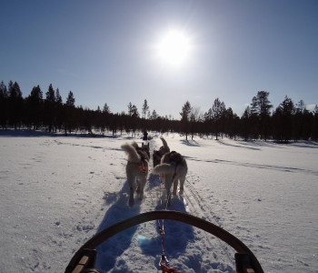 Winterliches Finnisch-Lappland: Unterwegs auf den Spuren des Nordlichts mit Schneeschuhen, Huskies und Rentieren