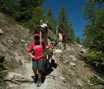 Lama-Trekking Riedgletscher