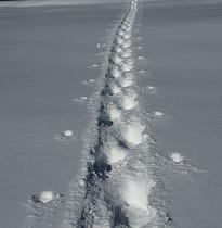 Schneeschuhtouren im Oberwallis