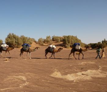 Marokko Sahara Trekking