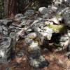 Luchsfallen im 19ten Jahrhundert-Ligurisches Rifugium